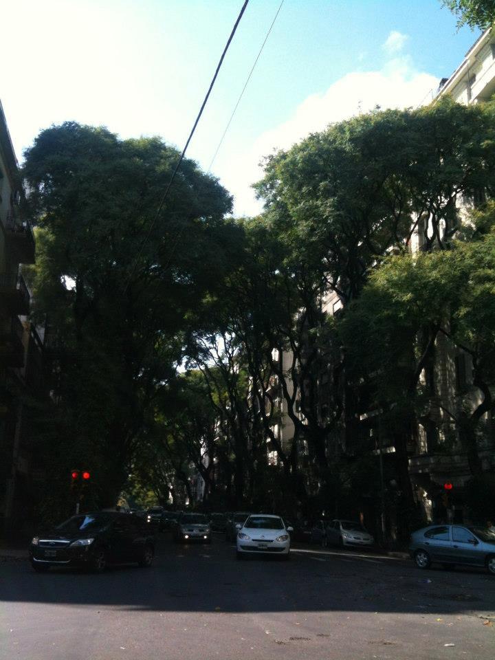 tall trees on Honduras